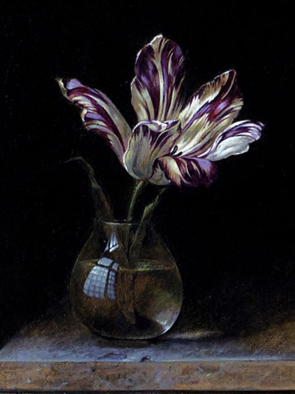 Tulip, oil on linen, 39.5 x 29.5cm